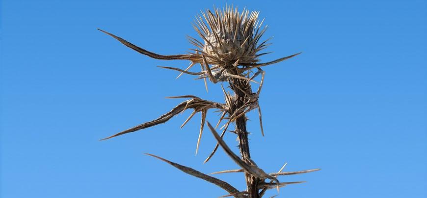 ugly-weeds-870x403 (1)